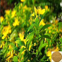 Hypericum perforatum extract hypericin 0.3 hyperforin 3% anti depression