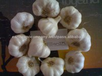 Indian Fresh Garlic exporter
