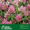 top quality red clover extract from distributor