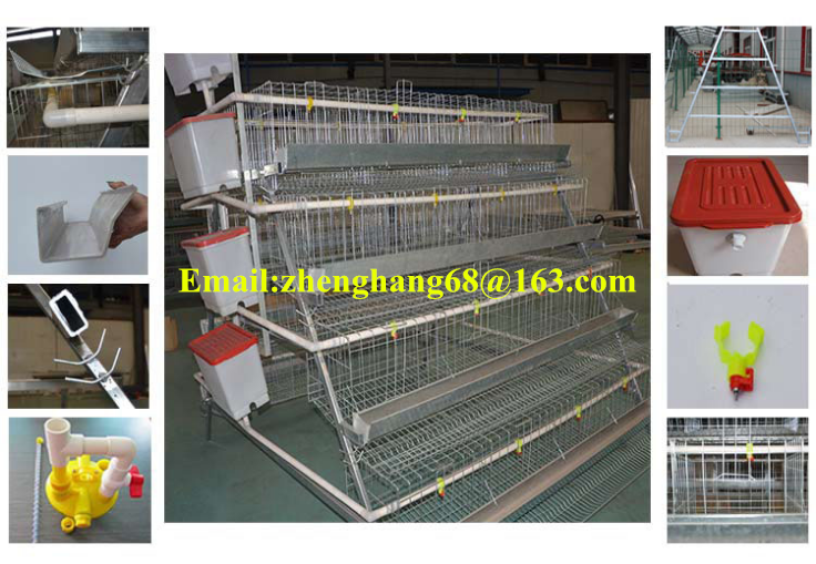 Poultry Farm Equipment Chicken Cage automatic quail cage best price cages for poultry