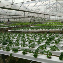 open greenhouses used greenhouse agricultural equipment