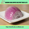 /product-detail/high-quality-fresh-chinese-onion-looking-for-buyers-60489794087.html