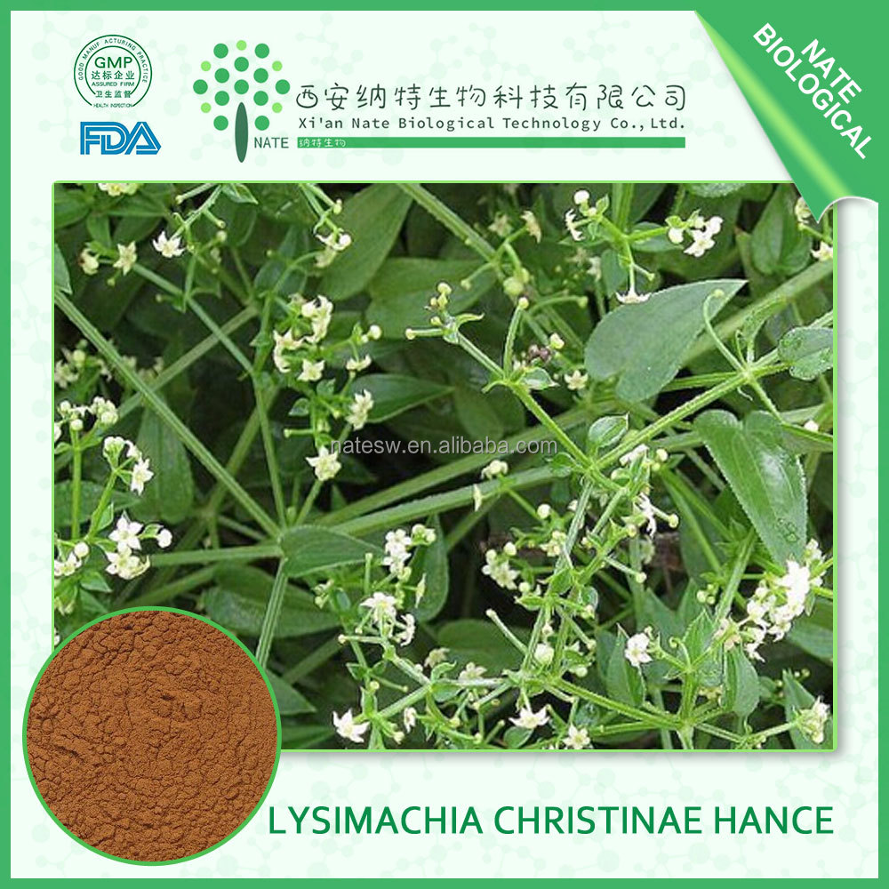 Care exporter health herbal product - Health Care Product Of Herba Lysimachiae Extract With 10 1