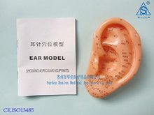 Ear acupuncture model 13CM