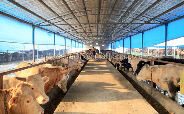 Low cost steel structure cattle /cow house