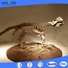 Innova- Museum Exhibition Original Size Dinosaur Fossils for hot sale
