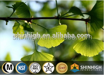 Pure Natural plant extract powder 24%/6%/5% ginko biloba extract