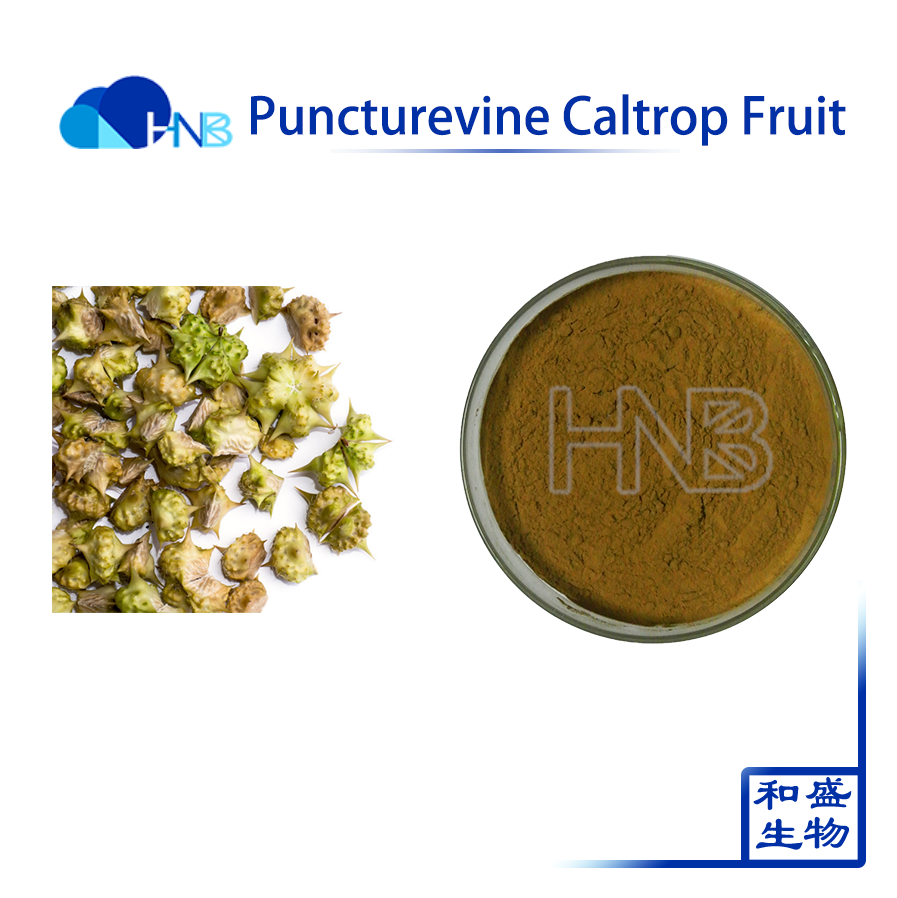 Natural pure plant extract Puncturevine Caltrop Fruit Extract / Tribulus terrestris L. Extract