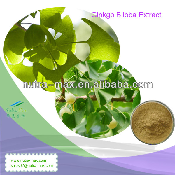 100% Natural Ginkgo Biloba Herbal Extract 24/6(Latin Name:Ginkgo Biloba L.)
