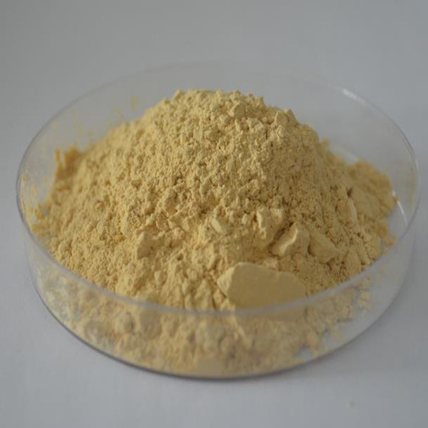 Natural herbal extract ginsenoside 80% panax ginseng extract