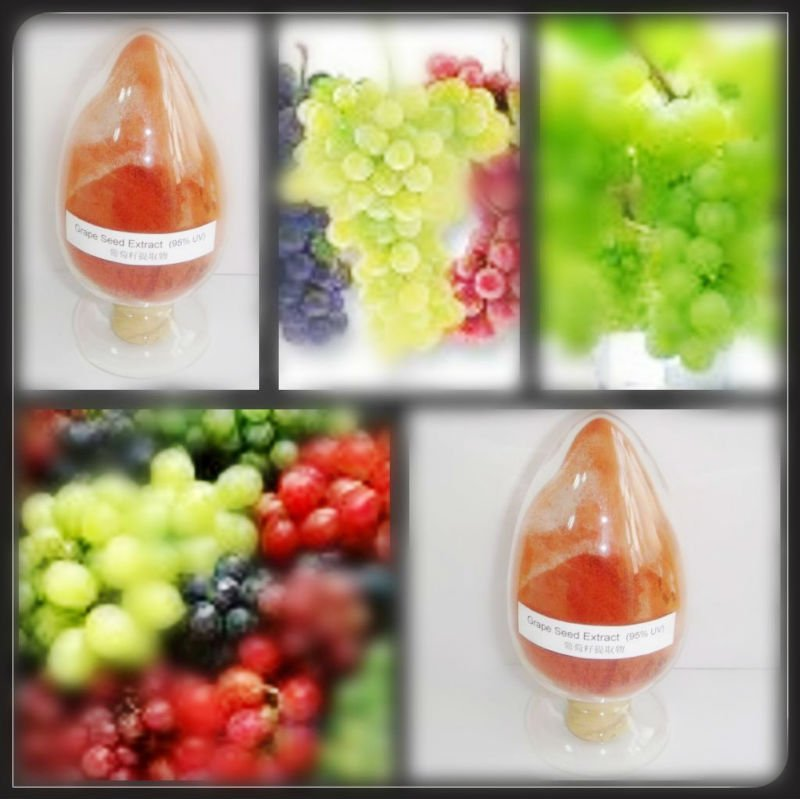 Top quality new style grape seed oil extract