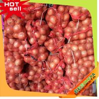 Fresh New Crop red onion exporters india