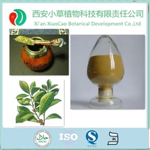 TOP SALE Ilex Paraguariensis/ParaguayTea plant extract/Yerba Mate Extract