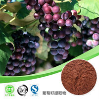 grape seeds extract with polyphenols 95% by uv /organic grape seed extract powder / grape seed extract polyphenol