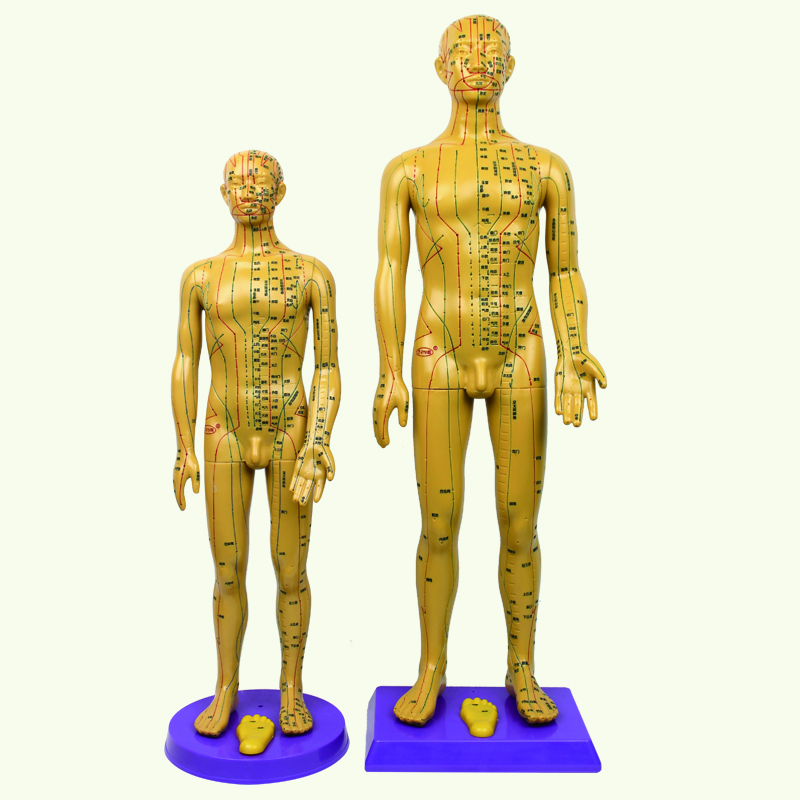 Medical acupuncture and acupuncture points Meridian human body <strong>model</strong> small copper men and women <strong>models</strong> super clear