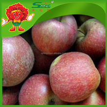 apple fruit exports high quality red chief apple from China