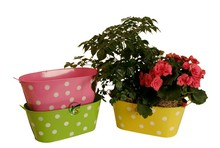 Oblong Metal Polka Dot Garden Containers For Plants