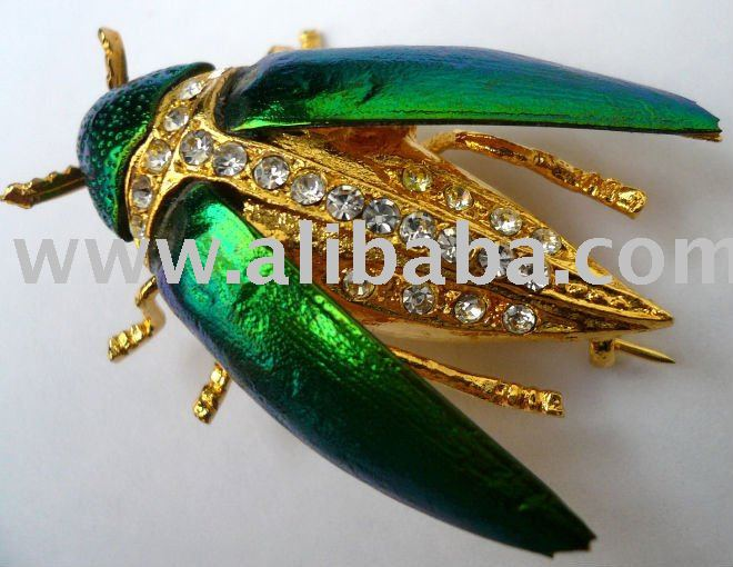 "Real METALLIC WOOD BORING BEETLE brooch ""Sternocera"""