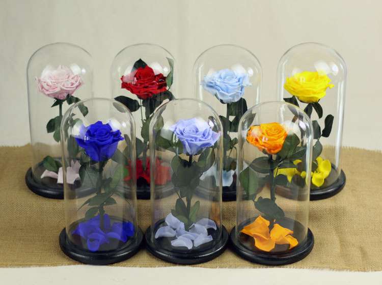 gift set preserved rose in glass cover with cheap price for exporting
