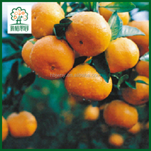 Original supplier cheap bulk mandarin oranges