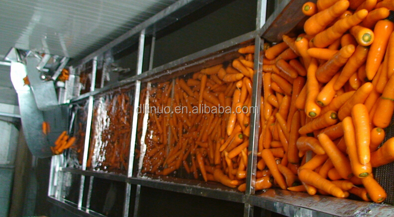 Chinese fresh carrot by a cheap price