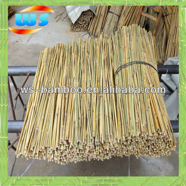 Bamboo cane for support olive tree