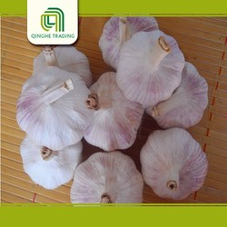 cheap normal white fresh garlic chinese bulk fresh pure white garlice for sale with great price