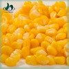 Gold supplier china fresh y healthy food canned maize price