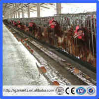 Guangzhou factory Sample free chicken cage layer poultry In Animal Cage