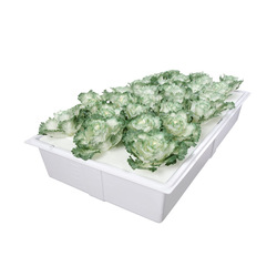 Best selling products plastic seedling tray hydroponic plant growing trays for wholesale