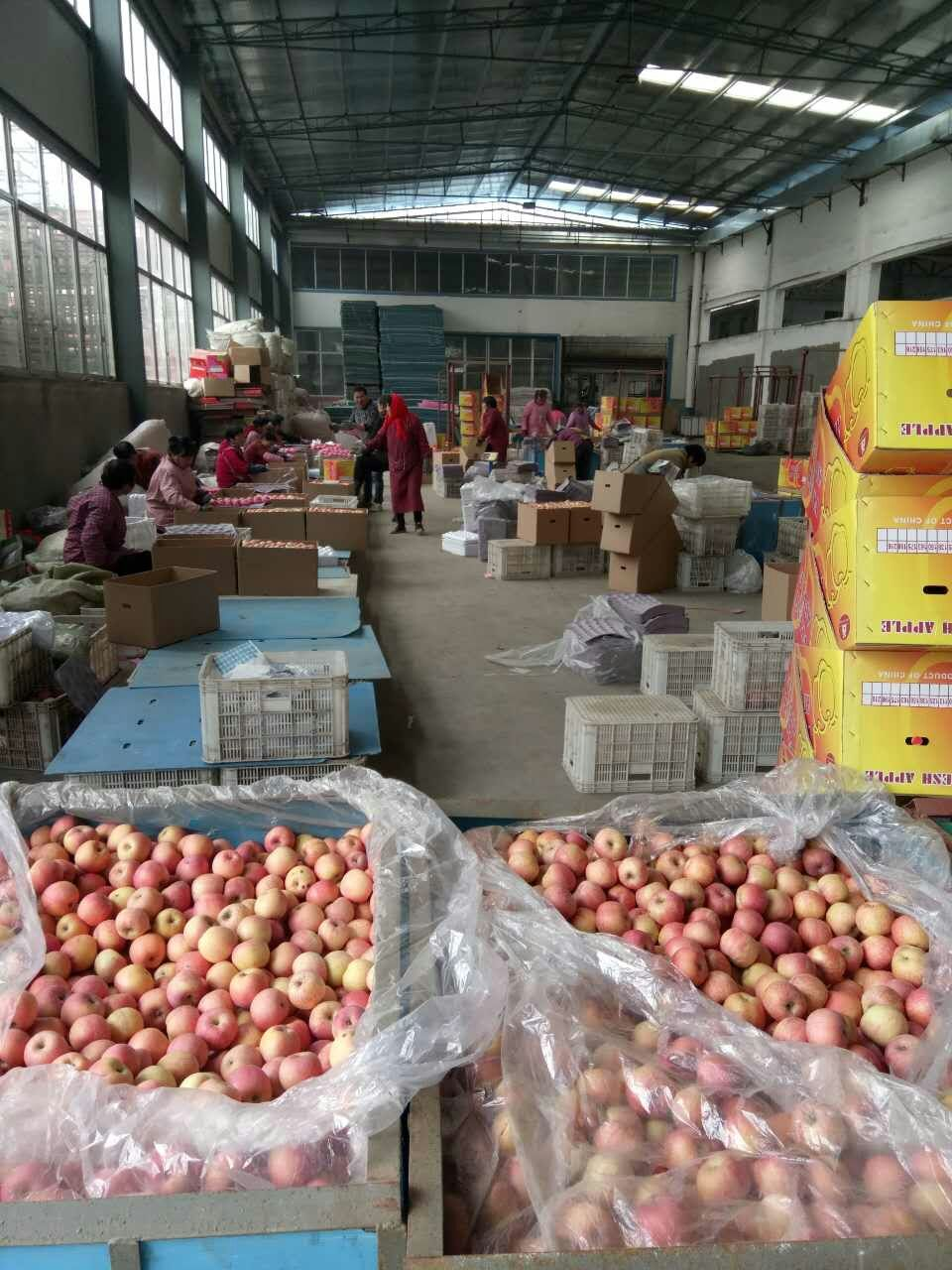 apples china 2012