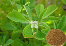 2015 china golden supplier wholesale high-end fenugreek extract p.e.