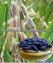 High Quality Long-Grain Organic Black Rice for Sale