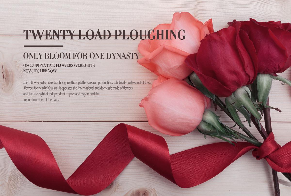 Kunming qingyi flower gardening co ltd fresh cut flower multi language sites izmirmasajfo