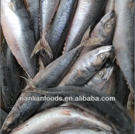 seafood (mackerel 300-500 )