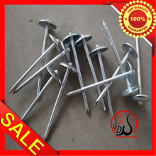 roofing nails -----dongtai