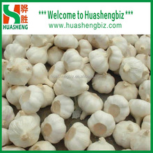 Top quality fresh garlic specification