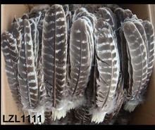 Natural Barred Mottled Turkey Wing Quill feathers LZL1111