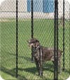 Commercial chain link pet kennels