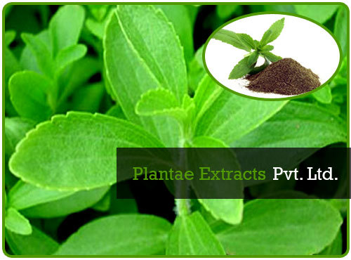 100% pure stevia rebaudiana bertoni and Stevia Extract