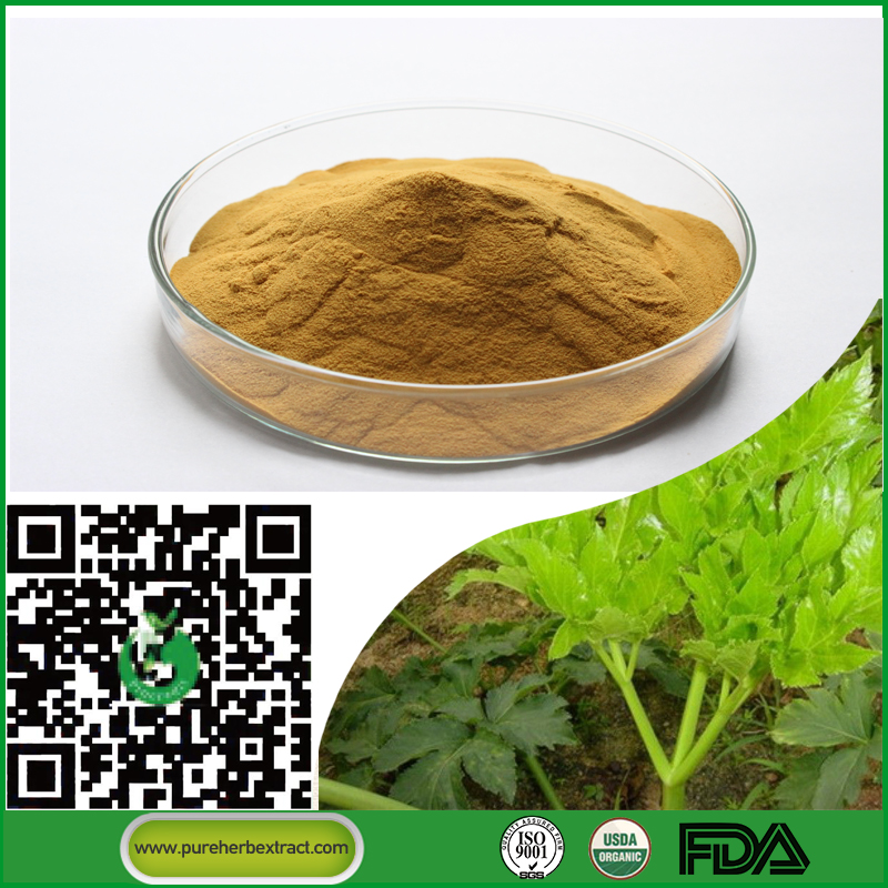 Ashitaba tomorrow leaf angelica keiskei ashitaba powder