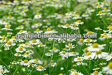 Natural Chamomile Extract 1.2%,3%, 90%, 95%, 98% Apigenin