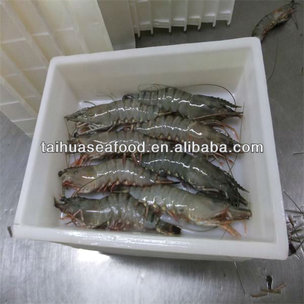 frozen shrimp and ocean seafood