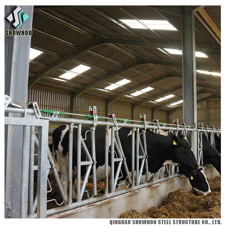 Cattle Farm Building Steel Structure Cow Shed