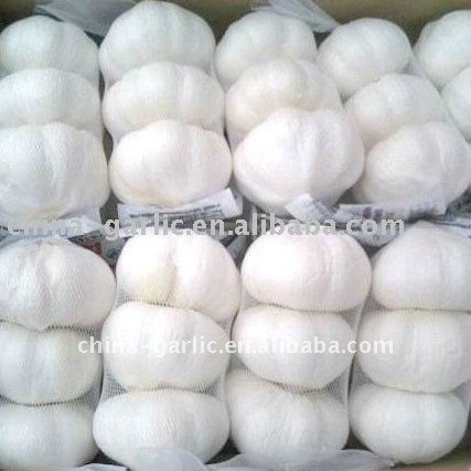 3P,4P,5P Net,Chinese Garlic Seeds 2011 New Prices.