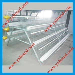 Poultry Farming Equipment used in chicken house