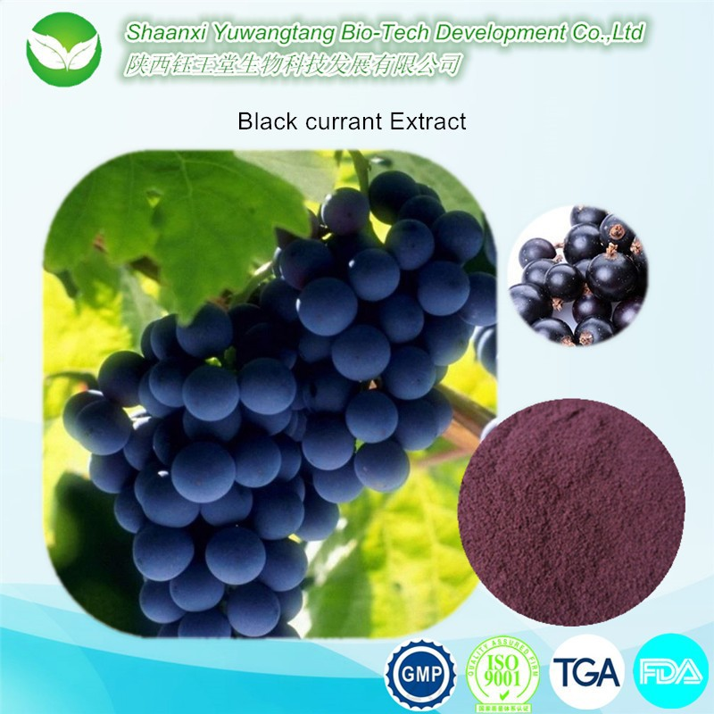 Bulk Food ingredient Pure nature brazilian acai berry extract