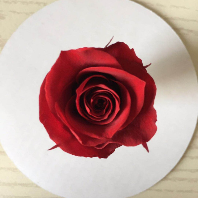 2018 Factory Supply Premium Preserved Roses Solid Color 4-5cm Preserved Rose Bud Head