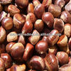Sweet Chinese Peeled Boiled Chestnut
