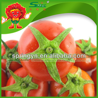 Organic certificated crystal tomato red fresh tomato
